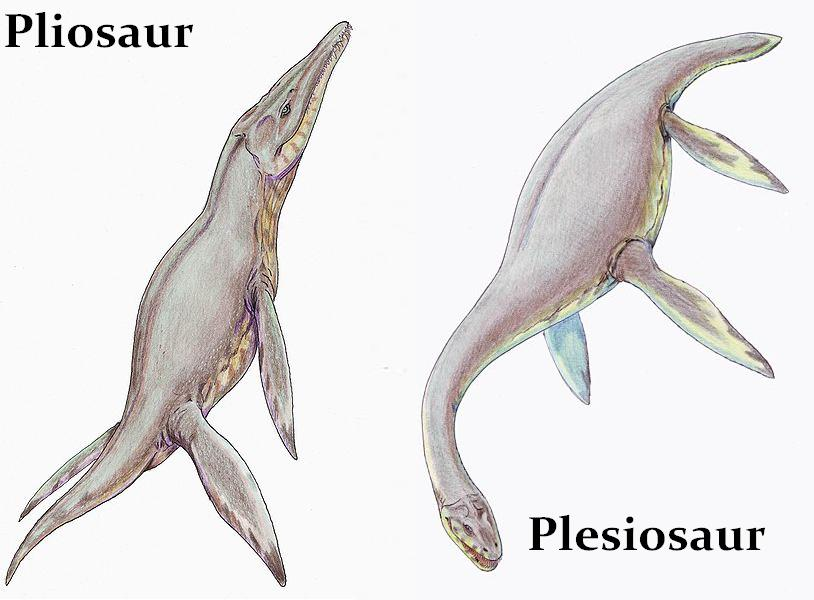 Pliosaur And Plesiosaur Profiles Already Answered