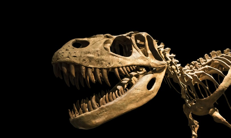 marques_dinosaurs_Shutterstock
